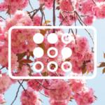 Трудовые будни iRidium в мае
